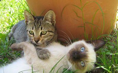 Nasopharyngeal Polyps in Cats